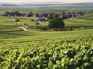 champagne-vineyards-iStock_000025393618_1200px